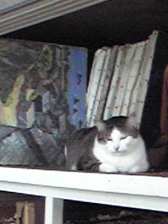 伯母のアトリエ猫