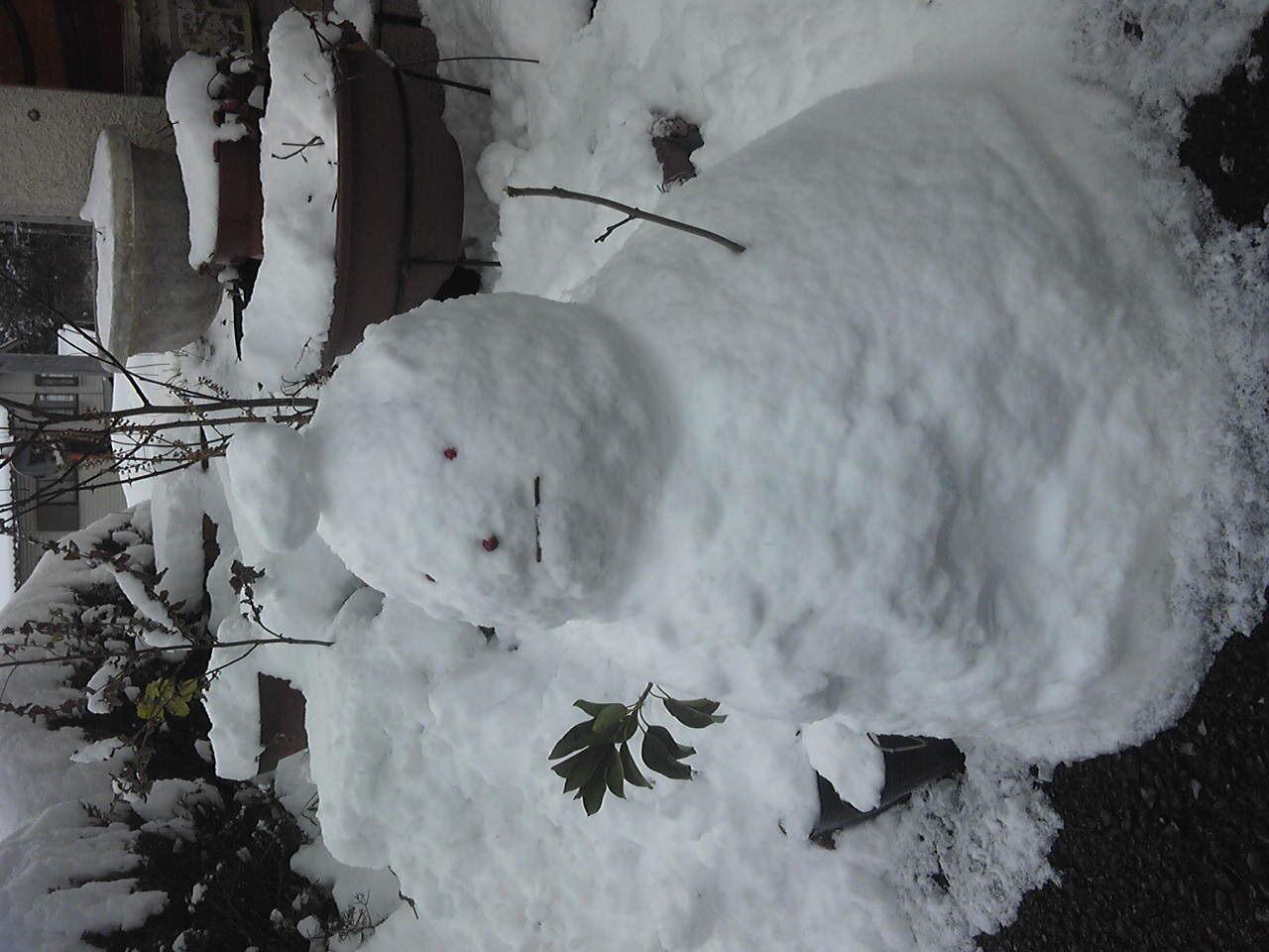 雪こんこん